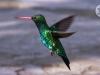 estancia-colibri