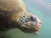 paaseiland-green-turtle-close-up